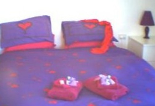 Aloomba Lavender - Accommodation - Accommodation 4U