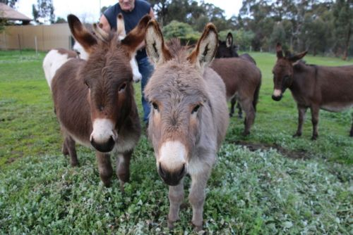 Donkey Tales Farm Cottages - Accommodation 4U