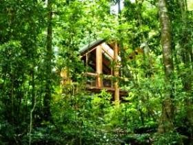 Fur'N'Feathers Rainforest Tree Houses - Accommodation 4U