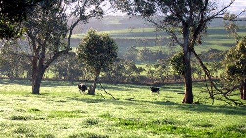 Bellevue Farmstay - Accommodation 4U